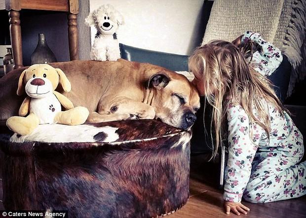 Giây phút vĩnh biệt đầy xúc động của cô bé 6 tuổi với chú chó mù và điếc - Ảnh 6.