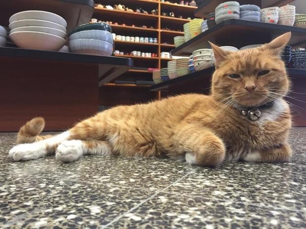 9 năm cần mẫn trông cửa hàng không nghỉ, chú mèo này đã trở nên nổi tiếng khắp New York - Ảnh 6.