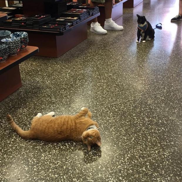 9 năm cần mẫn trông cửa hàng không nghỉ, chú mèo này đã trở nên nổi tiếng khắp New York - Ảnh 8.