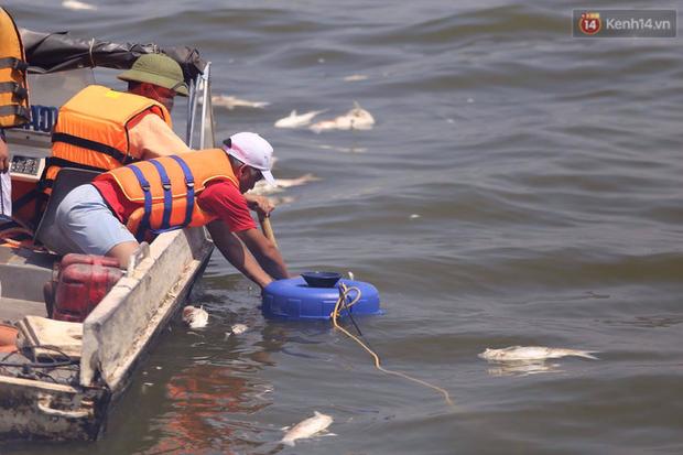 Ngày 3/10: Cá chết nổi ngày càng nhiều ở hồ Tây; đang tiếp tục bơm oxy, sục khí - Ảnh 10.