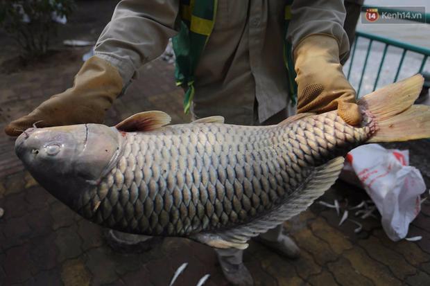 Những xác cá nặng hàng cân nổi lềnh bềnh - cảnh tượng đầy ám ảnh ở hồ Tây ngày hôm nay! - Ảnh 16.