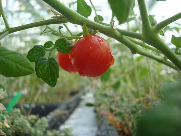 Tiết lộ các loại rau củ quả sẽ được trồng trên sao Hỏa - Ảnh 2.