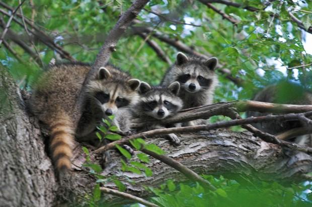 4 loài động vật trên thế giới đang vượt xa con người - Ảnh 5.