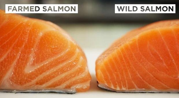Cá hồi nuôi và cá hồi tự nhiên: loại nào mới thực sự tốt? - Ảnh 2.