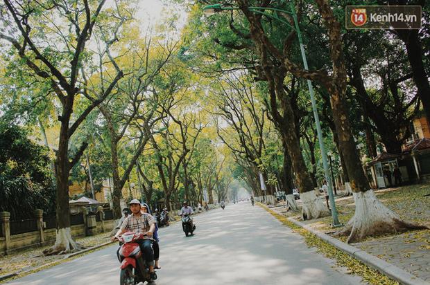 Người Hà Nội thích thú chụp ảnh với những con đường trải thảm lá vàng - Ảnh 1.