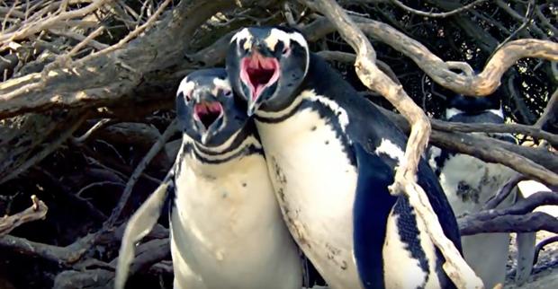Vợ đi theo trai lạ, chim cánh cụt chồng đánh ghen đẫm máu - Ảnh 2.
