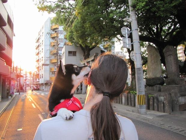 Ở nhiều nước trên thế giới, có bắt buộc phải rọ mõm chó khi dắt chúng đi dạo? - Ảnh 5.