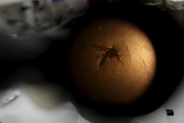 Chùm ảnh: khi virus Zika gieo rắc nỗi kinh hoàng trên toàn thế giới - Ảnh 17.