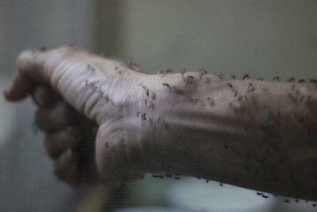 Chùm ảnh: khi virus Zika gieo rắc nỗi kinh hoàng trên toàn thế giới - Ảnh 9.