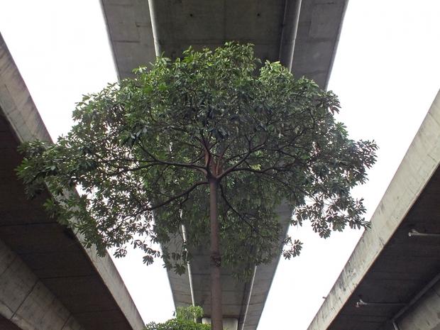 Cây xanh mọc um tùm, đẹp mắt dưới gầm đường sắt trên cao ở nhiều nước trên thế giới - Ảnh 11.
