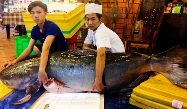 Cận cảnh cặp cá khủng giá 400 triệu đồng phục vụ đại gia Sài Gòn - Ảnh 1.
