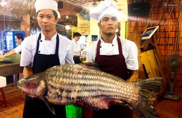 Cận cảnh cặp cá khủng giá 400 triệu đồng phục vụ đại gia Sài Gòn - Ảnh 2.