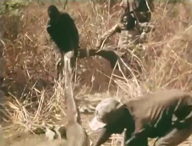 Xem thợ săn Châu Phi dùng chân trần làm mồi nhử bắt trăn khổng lồ - Ảnh 2.
