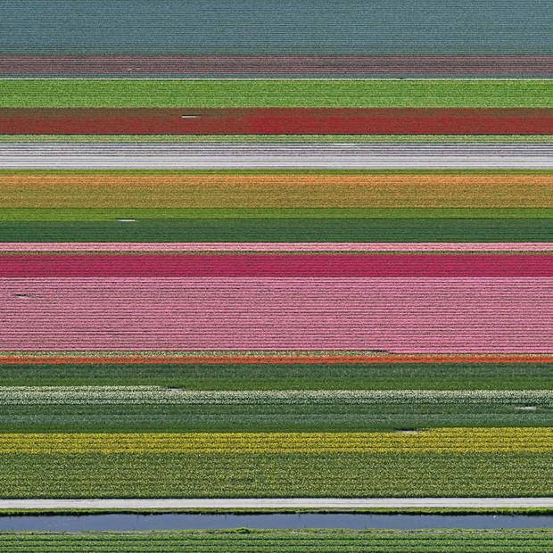 Bộ ảnh này sẽ cho bạn biết vì sao những cánh đồng tulip khiến cho vạn người mê - Ảnh 10.