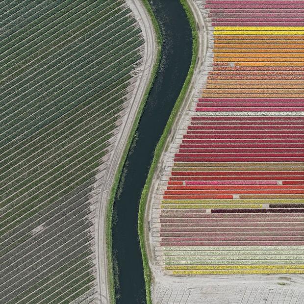 Bộ ảnh này sẽ cho bạn biết vì sao những cánh đồng tulip khiến cho vạn người mê - Ảnh 4.