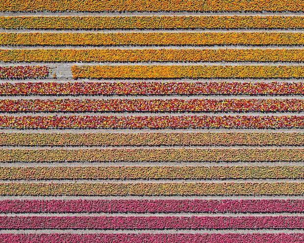 Bộ ảnh này sẽ cho bạn biết vì sao những cánh đồng tulip khiến cho vạn người mê - Ảnh 3.
