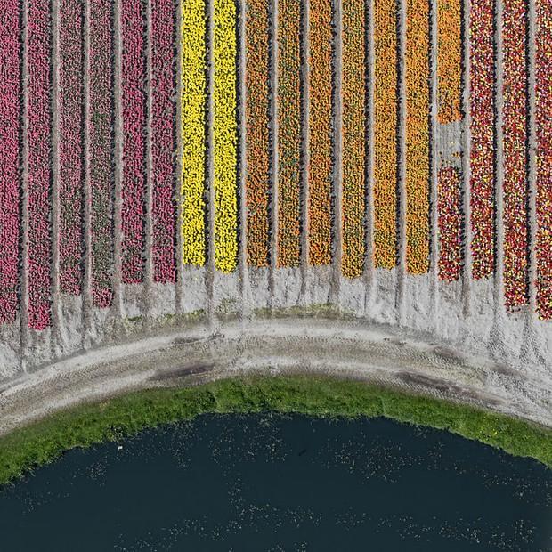Bộ ảnh này sẽ cho bạn biết vì sao những cánh đồng tulip khiến cho vạn người mê - Ảnh 9.