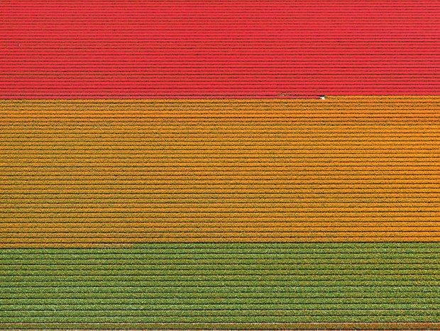 Bộ ảnh này sẽ cho bạn biết vì sao những cánh đồng tulip khiến cho vạn người mê - Ảnh 7.