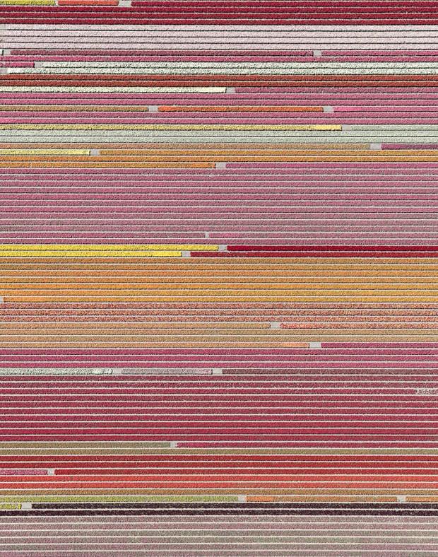 Bộ ảnh này sẽ cho bạn biết vì sao những cánh đồng tulip khiến cho vạn người mê - Ảnh 8.