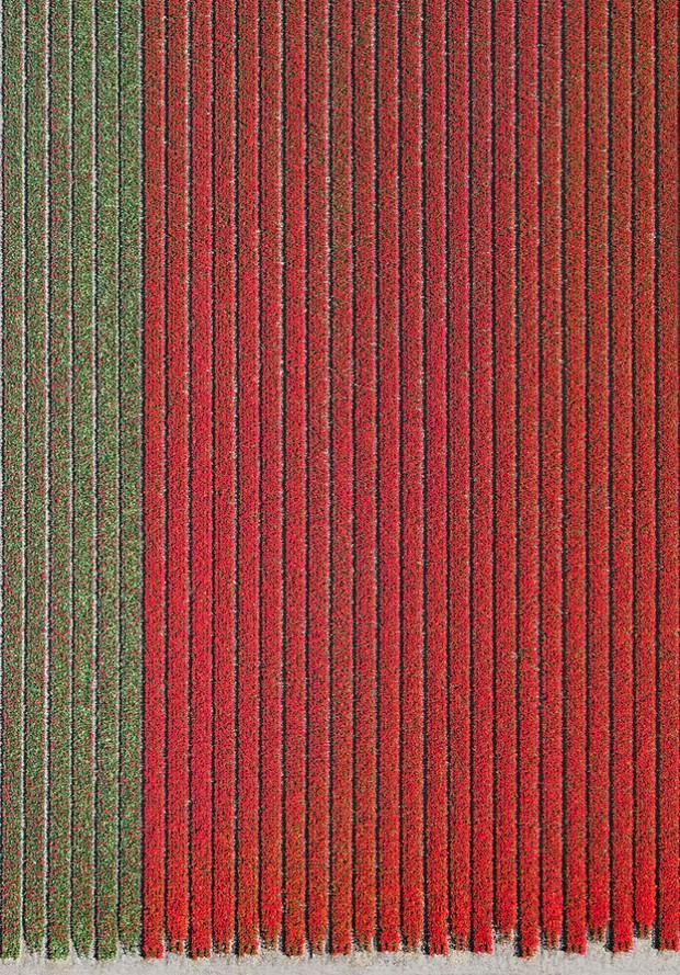 Bộ ảnh này sẽ cho bạn biết vì sao những cánh đồng tulip khiến cho vạn người mê - Ảnh 6.