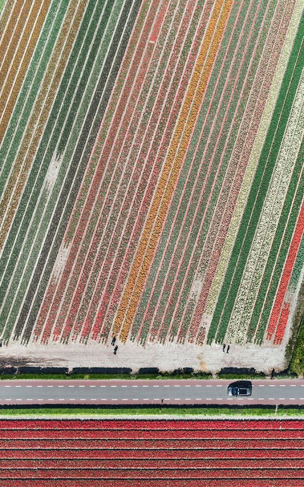 Bộ ảnh này sẽ cho bạn biết vì sao những cánh đồng tulip khiến cho vạn người mê - Ảnh 2.