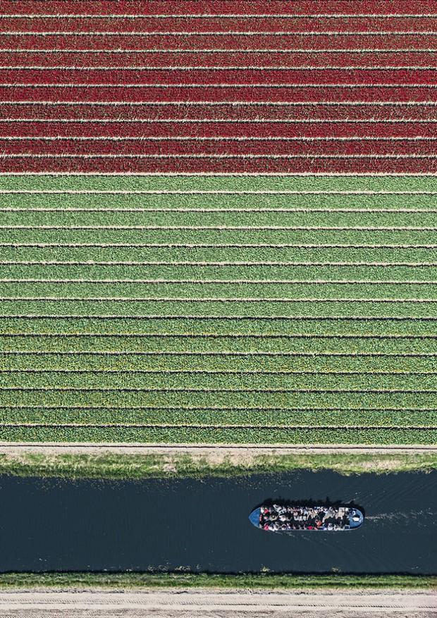 Bộ ảnh này sẽ cho bạn biết vì sao những cánh đồng tulip khiến cho vạn người mê - Ảnh 11.