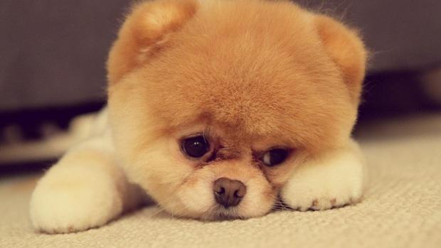 14 lý do chứng minh người yêu có thể không có nhưng chó nhất định phải có một con - Ảnh 8.