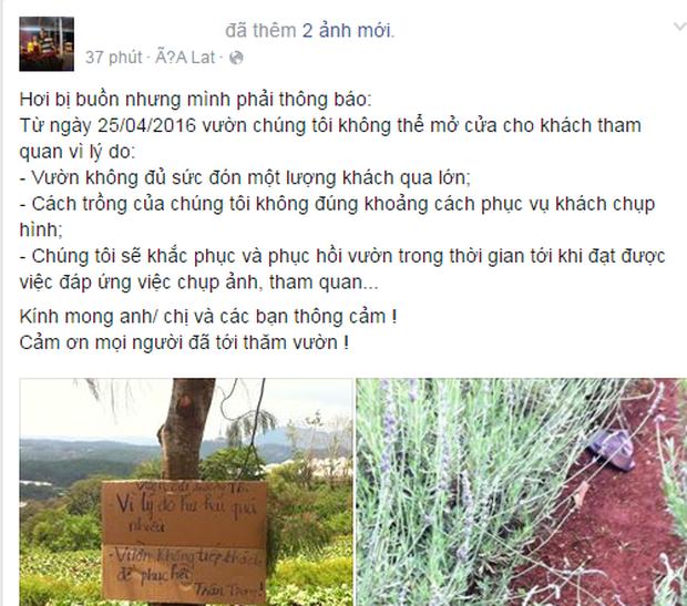 Vườn oải hương ở Đà Lạt đã phải đóng cửa vì hoa bị dập gãy bởi các bạn trẻ đến tham quan - Ảnh 3.