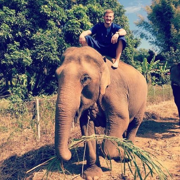Câu chuyện đau lòng đằng sau những con voi hiền hòa tại Thái Lan - Ảnh 1.