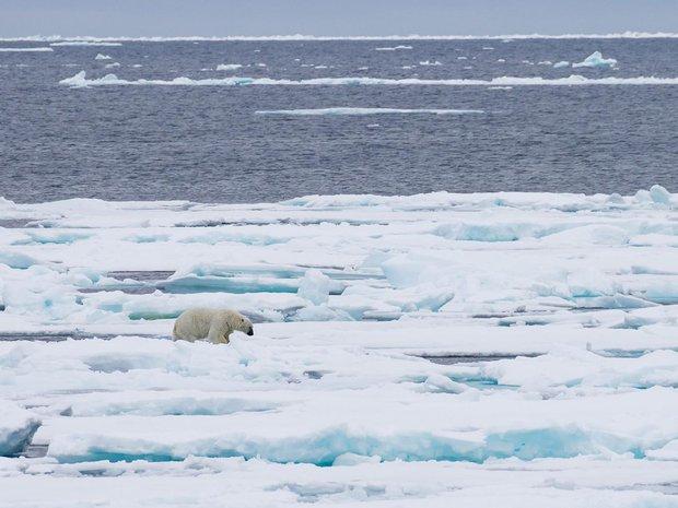 Kết quả hình ảnh cho bắc cực có wifi
