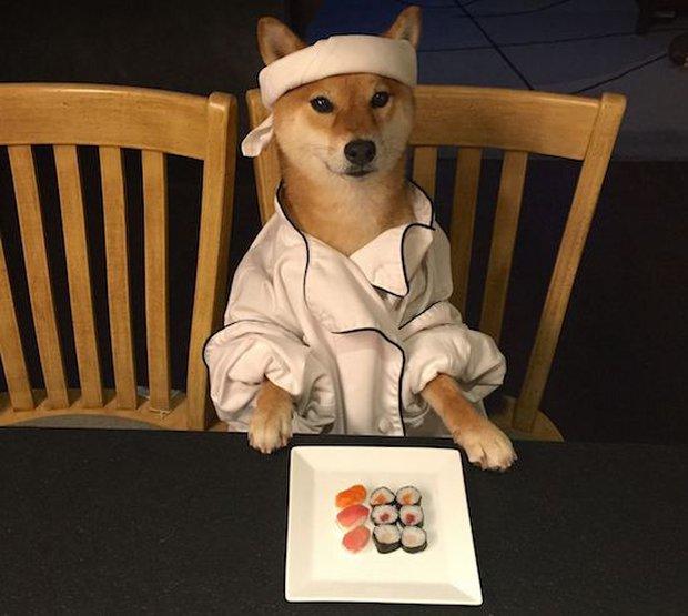 9 bức ảnh chế chú chó đầu bếp siêu bựa này sẽ khiến bạn cười nghiêng ngả - Ảnh 1.