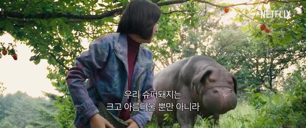 Chết ngất với quái vật siêu đáng yêu lai giữa lợn và hà mã từ bom tấn Okja - Ảnh 4.