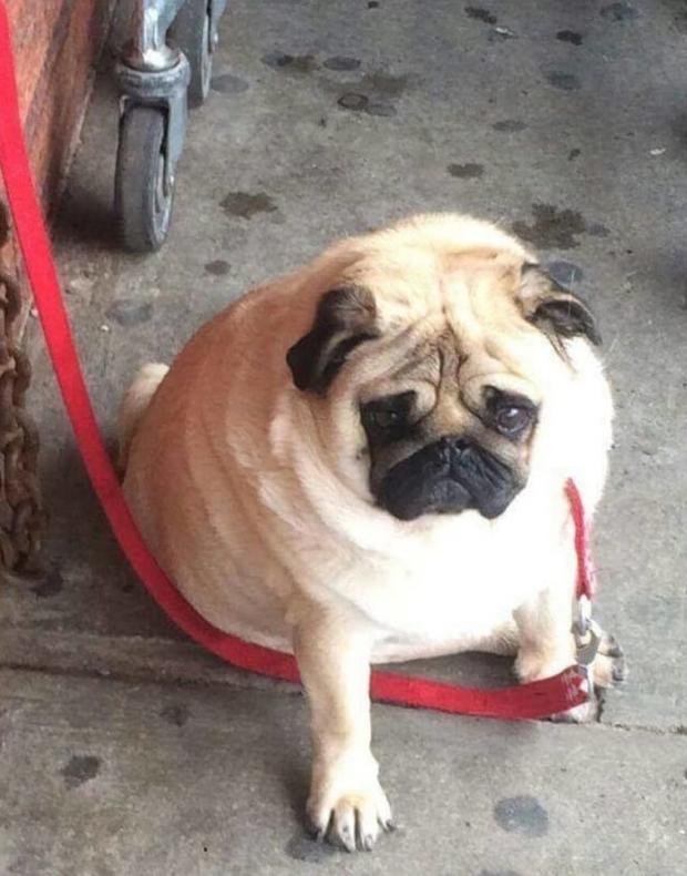 Hình ảnh những chú chó buồn bã chờ đợi chủ trên phố sẽ khiến bạn bật khóc - Ảnh 1.