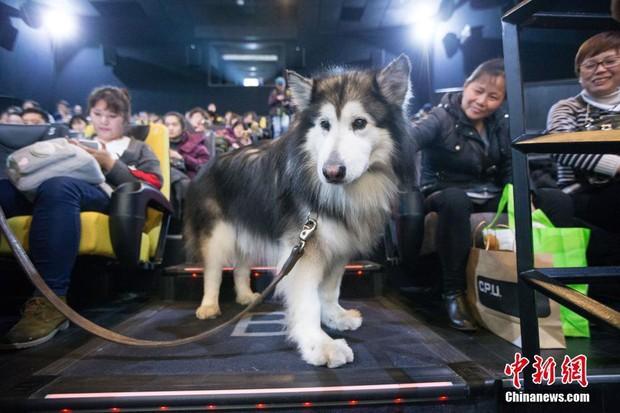 Suất chiếu phim đặc biệt dành cho chó và nguyên nhân khiến nhiều người xúc động nghẹn ngào - Ảnh 1.
