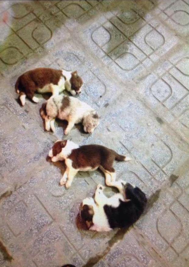 Xót xa trước cảnh 4 chú chó con lần lượt bị ném từ chung cư xuống đất - Ảnh 3.