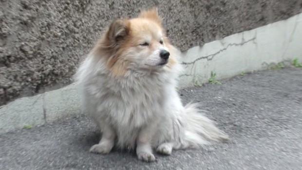 Chú chó bị bỏ rơi 3 năm vẫn đợi chủ, nhưng chủ nhân của nó không hề đáng trách như người ta nghĩ - Ảnh 2.