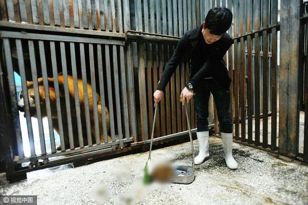 Không tin nổi ở Trung Quốc người ta tranh nhau chi tới 3 triệu đồng để được đi hót phân cho Gấu Bắc Cực - Ảnh 1.