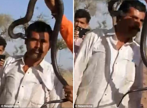 Mải mê chụp ảnh với rắn hổ mang, 1 tiếng sau người đàn ông lăn ra chết - Ảnh 3.