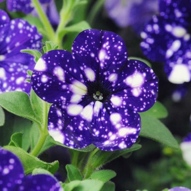 Loài hoa vi diệu như chứa cả dải thiên hà lung linh ở trong đó - Ảnh 1.