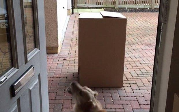 Nhận được một hộp quà từ phương xa, chú chó nhỏ đã vô cùng bất ngờ trước điều bí mật bên trong - Ảnh 2.