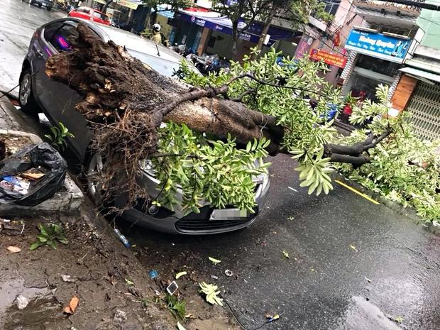 Đà Nẵng: Mưa lớn, cây xanh bật gốc đè móp đầu ôtô đậu bên đường - Ảnh 1.