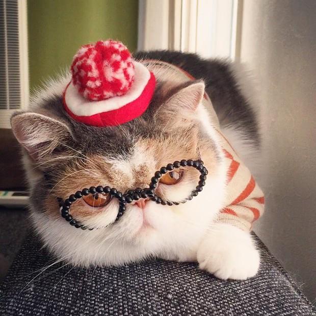 Chú mèo có bộ mặt nghiêm trọng nhất quả đất - Ảnh 1.