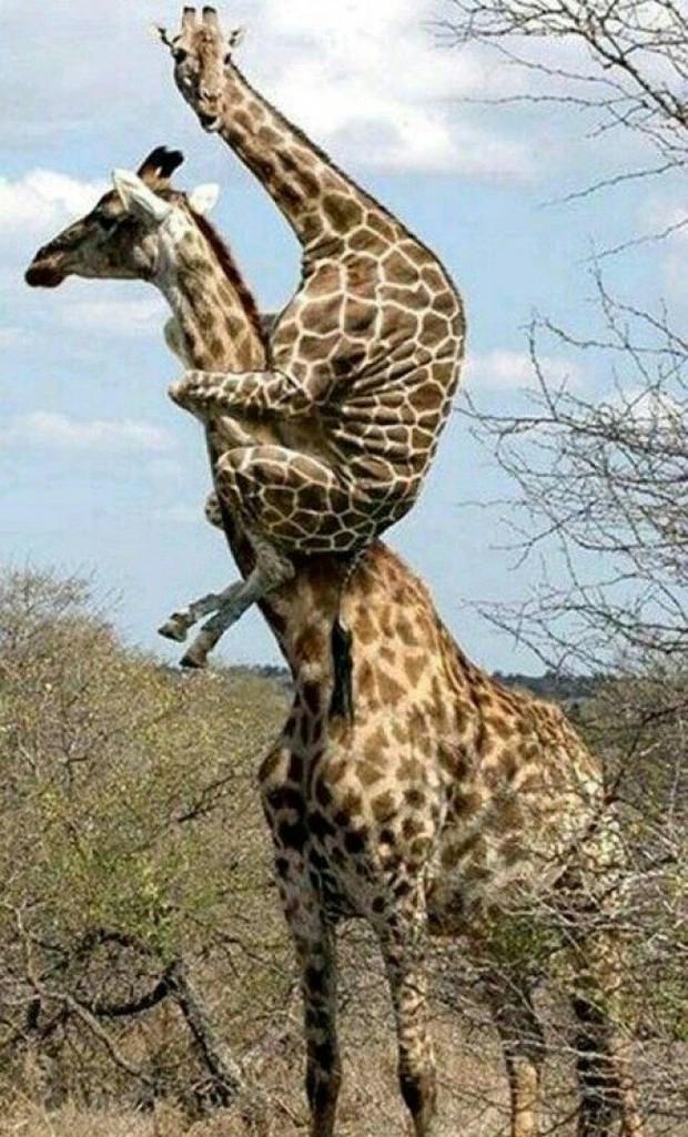 18 biểu cảm cười rơi mồm của các danh hài động vật - Ảnh 1.