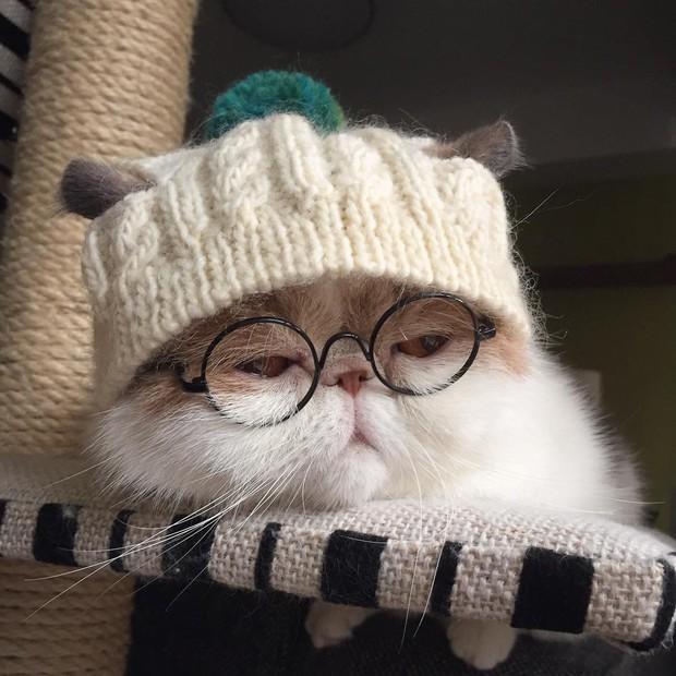 Chú mèo có bộ mặt nghiêm trọng nhất quả đất - Ảnh 19.