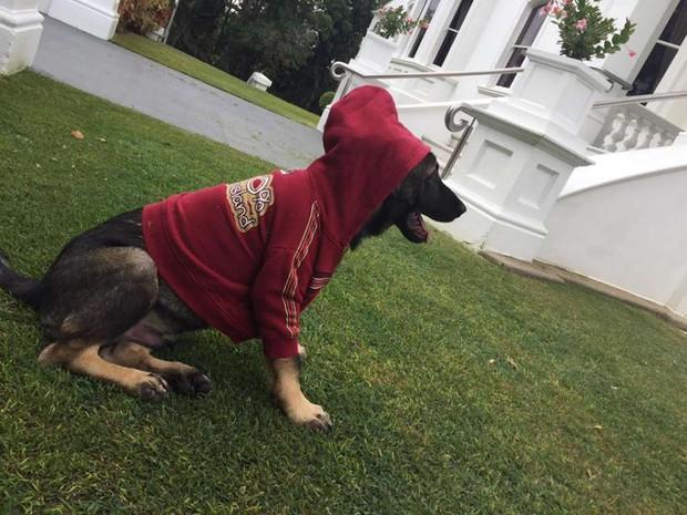 Chú chó cảnh sát bị sa thải vì một lý do vô cùng đáng yêu - Ảnh 4.