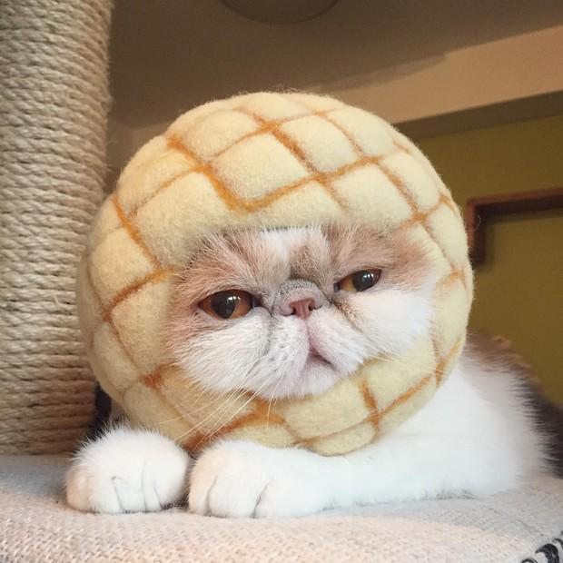 Chú mèo có bộ mặt nghiêm trọng nhất quả đất - Ảnh 21.