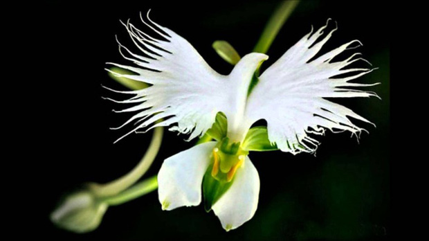 14 loài hoa có hình dạng kỳ lạ nhất thế giới - Ảnh 7.