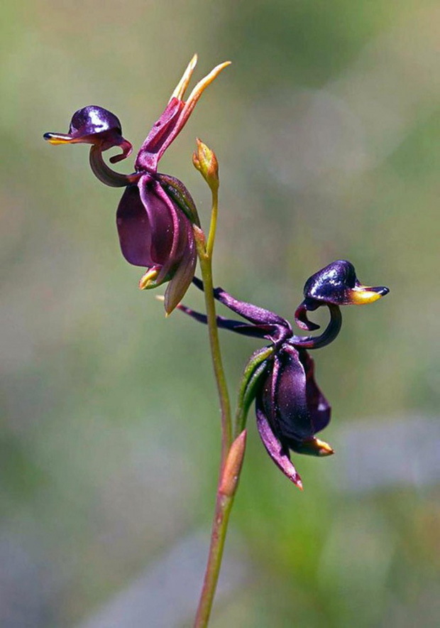 14 loài hoa có hình dạng kỳ lạ nhất thế giới - Ảnh 21.