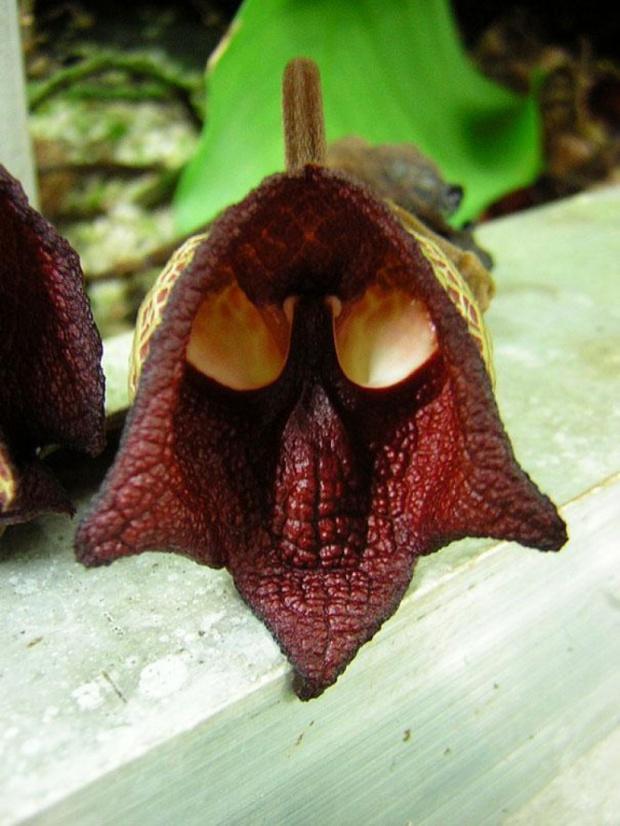 14 loài hoa có hình dạng kỳ lạ nhất thế giới - Ảnh 23.