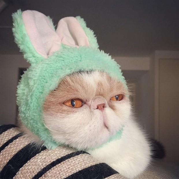 Chú mèo có bộ mặt nghiêm trọng nhất quả đất - Ảnh 23.